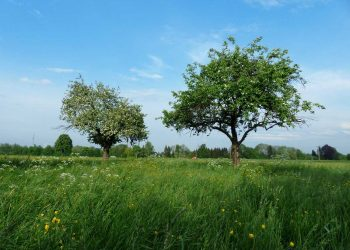 Tree Planting Ideas – Keep Your New Trees Healthy