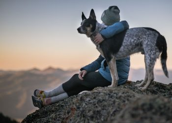 Why You Should Seriously Consider Owning a Dog – Its Fun Benefits