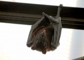 Removing Bats From Your Property – Simple Tips You Should Follow